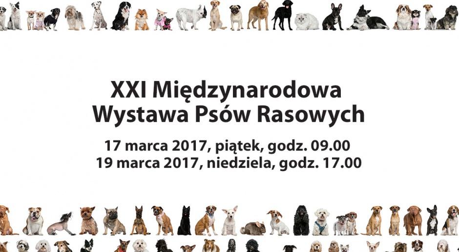 Wystawa psów rasowych w Spodku